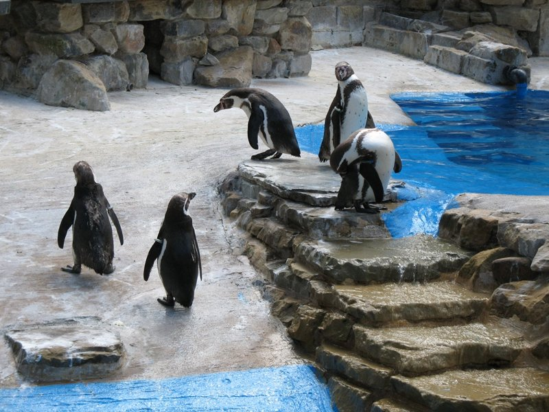 Long Beach Visitors Guide Aquarium of The Pacific | World In Four Day: A Travel & Lifestyle Blog