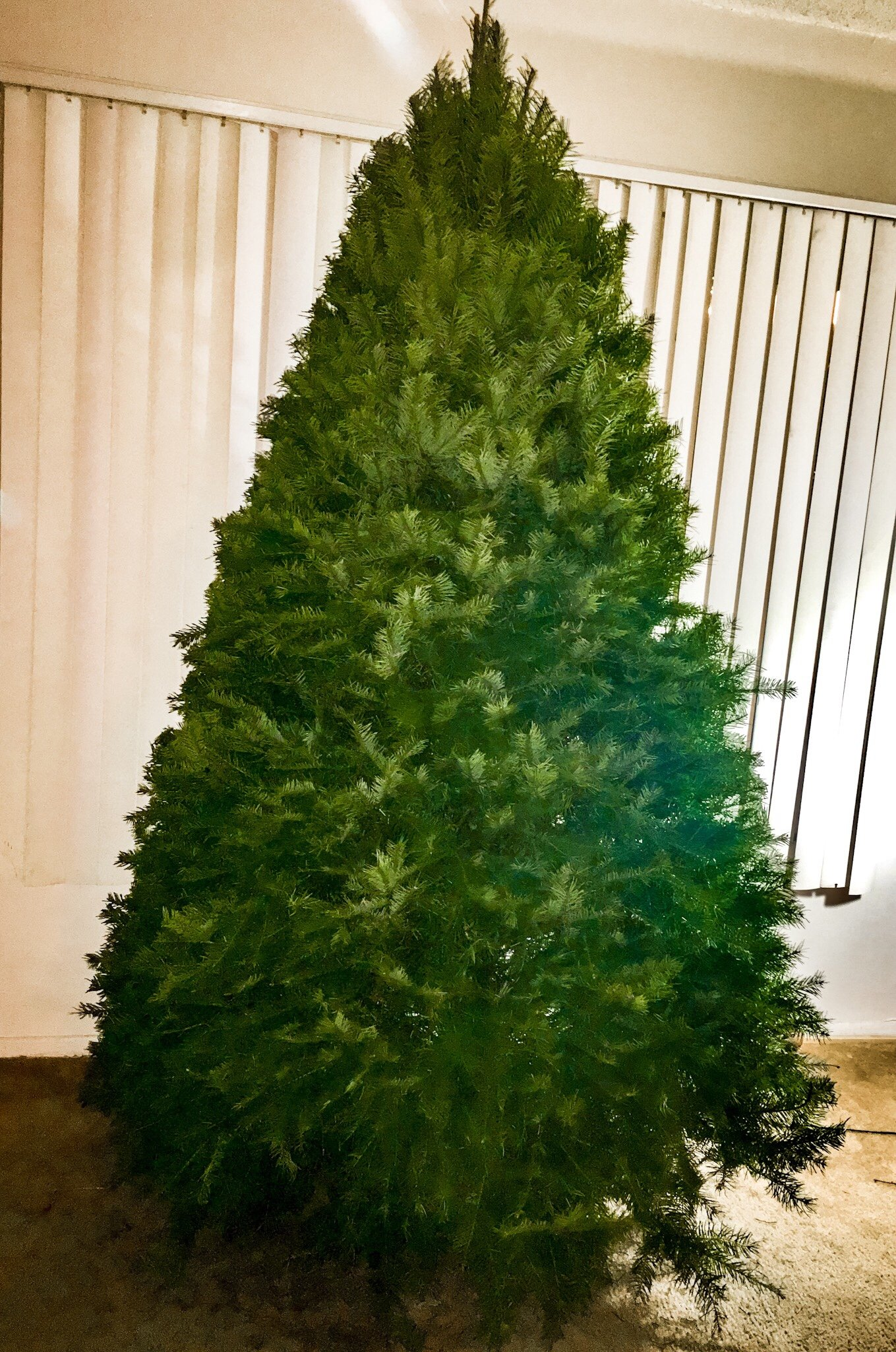 Does Costco Sell Christmas Trees? They Do, and They Are Epic!